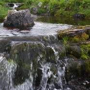 Gewässer4